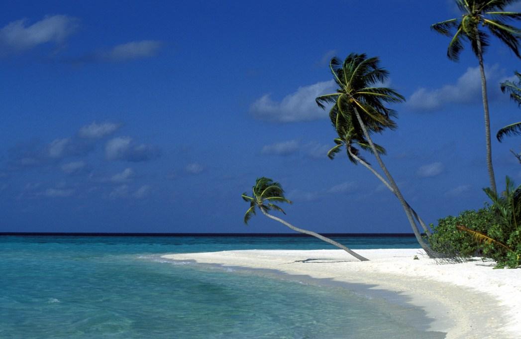 Trooppinen ranta ja palmuja